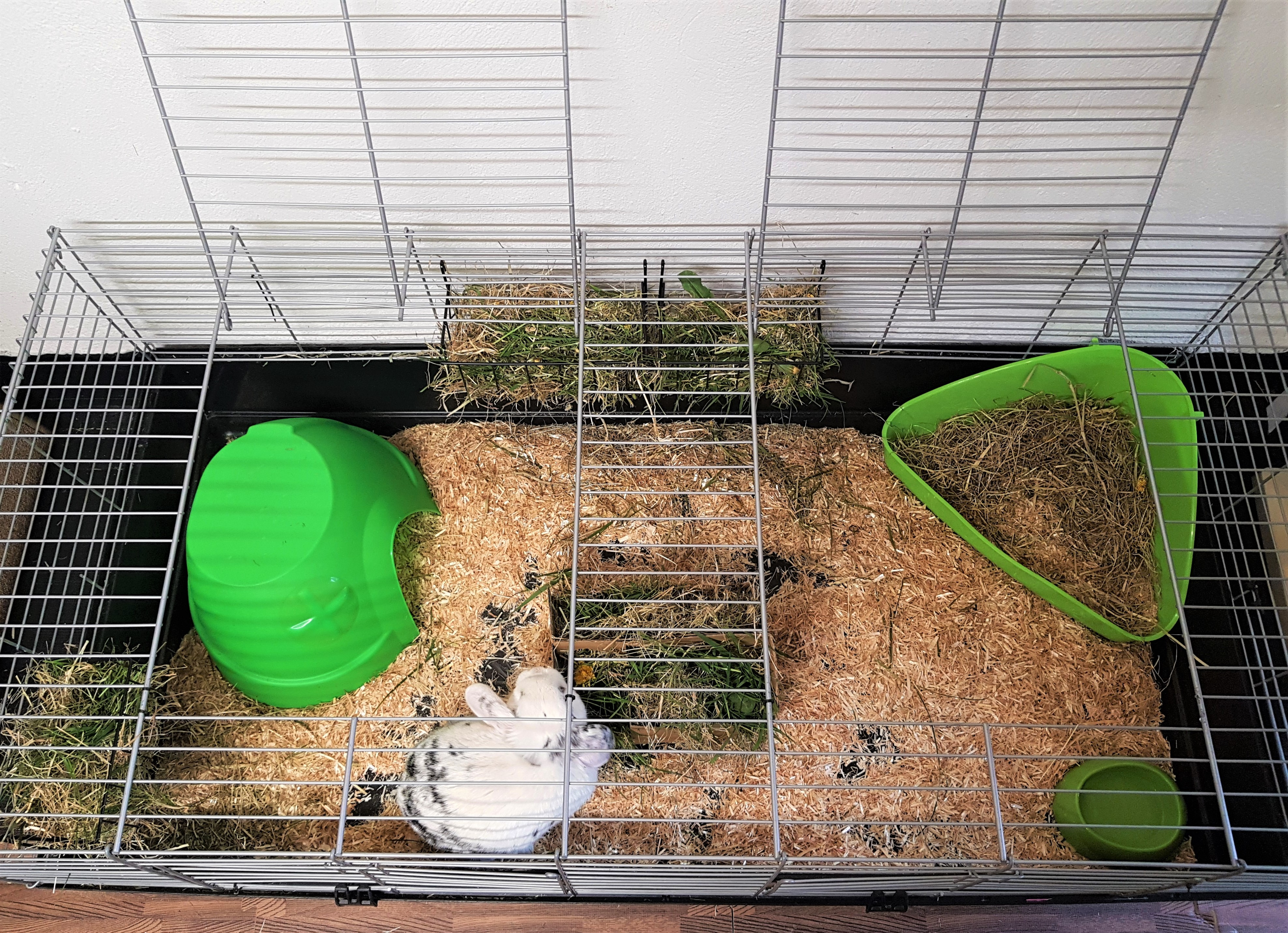 Rabbit indoor cages €8 per Day or €50 for 1 week