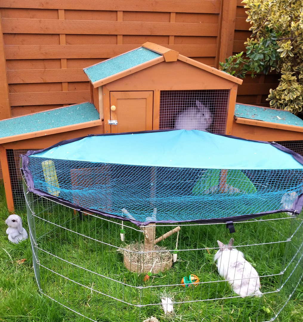 Holiday hutch for Rabbits