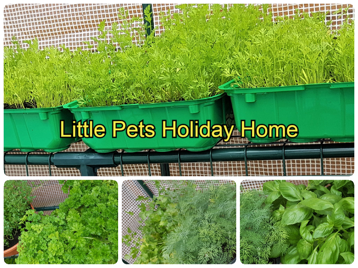Our fresh herbs and vegetables