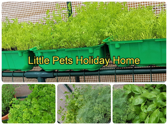 Some of our fresh herbs and vegetables that we grow mainly in the spring & summer.