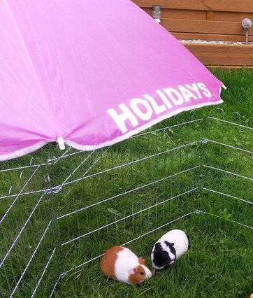 Guinea pig Holiday resort