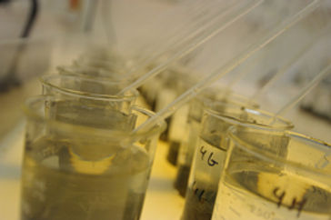 Sediment Toxicity Testing