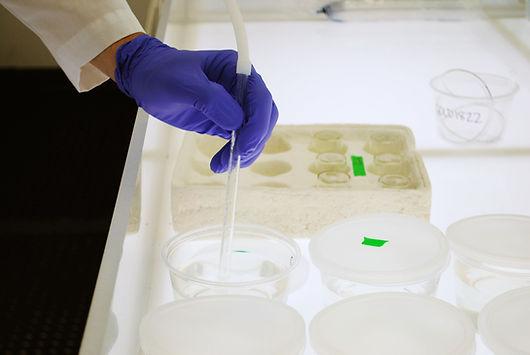 Fathad minnow txicity testing, WET Testing