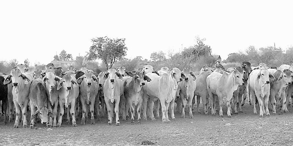 2019 Cattlemen's Dinner