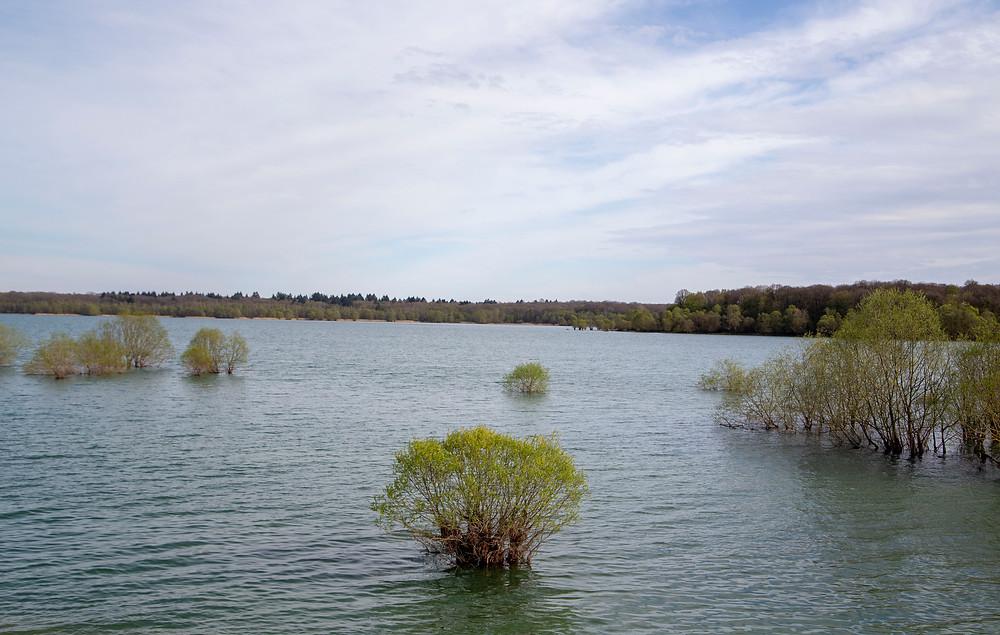 Grands Lacs du Parc Régional de la Forêt d'Orient