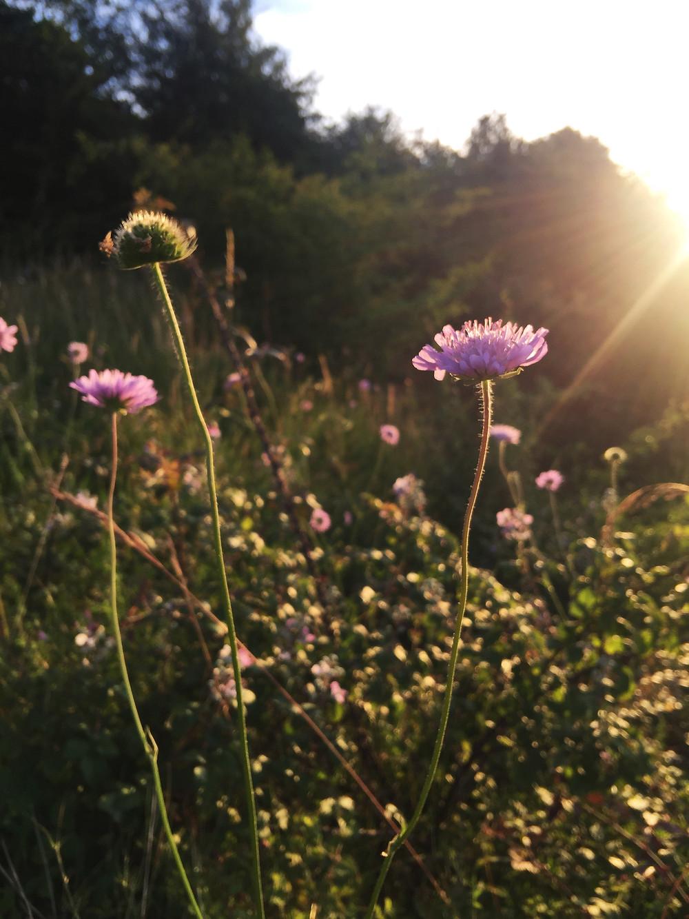 fleurs vallee mayenne