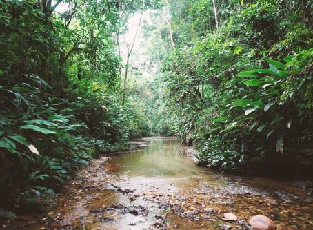 Mon expérience inoubliable en Amazonie avec la communauté Kichwa.