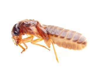 Termite Inspection - Do-it-yourself tips