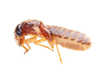 termite_inspection_cost_los_angeles