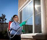 termite fumigation or spot treatment