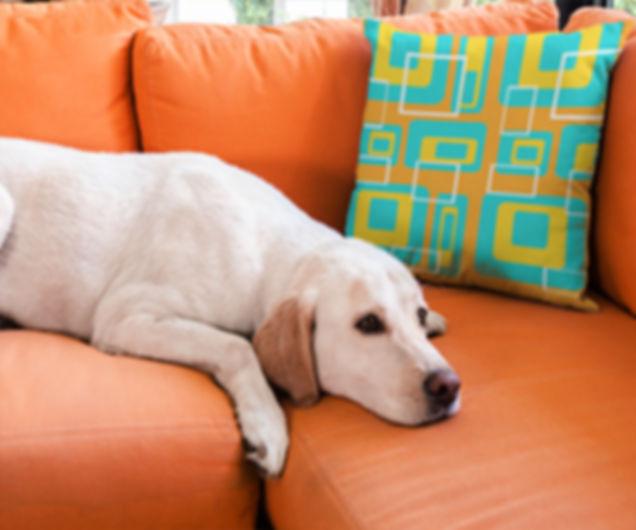 crash pad designs mod pillow and pup