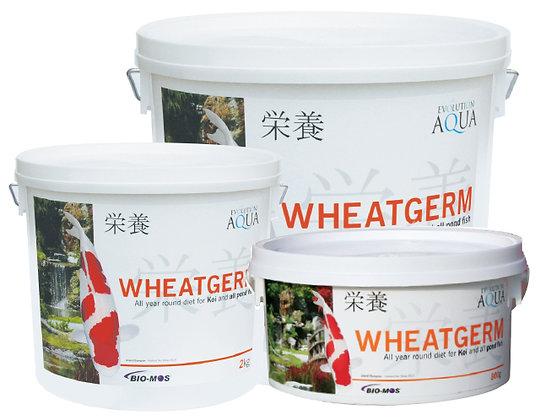 Evolution Aqua - Wheatgerm Food - Medium Pellet 5-6mm
