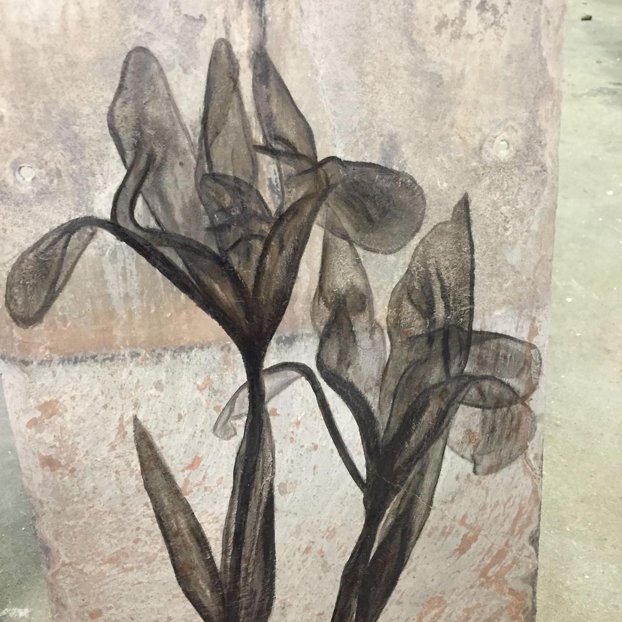 iris xray art, logo