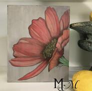 Coral daisy 1.jpg