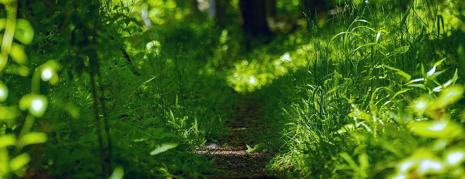 calm path