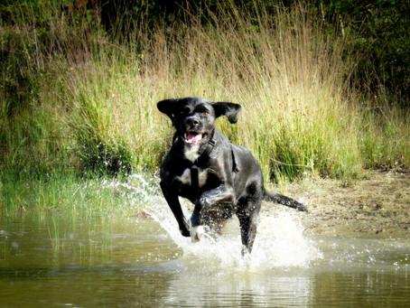 Abkühlung für den Hund - Tipps für heiße Tage