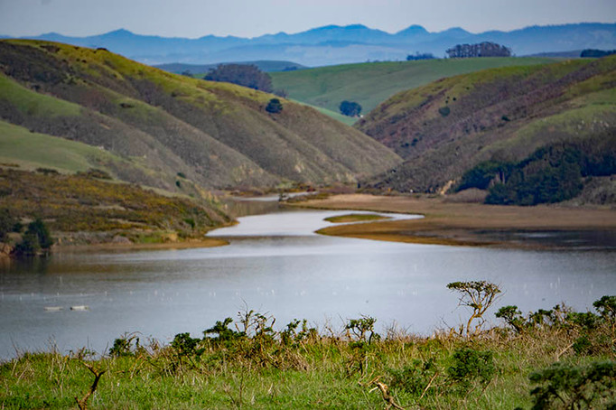 Near Tomales Point