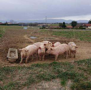 Une photographie d'une des fermes de Montseveroux.