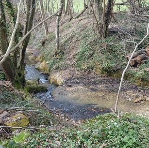 Une photograpie de l'Espace Naturel Sensible de la Sanne-Amont.