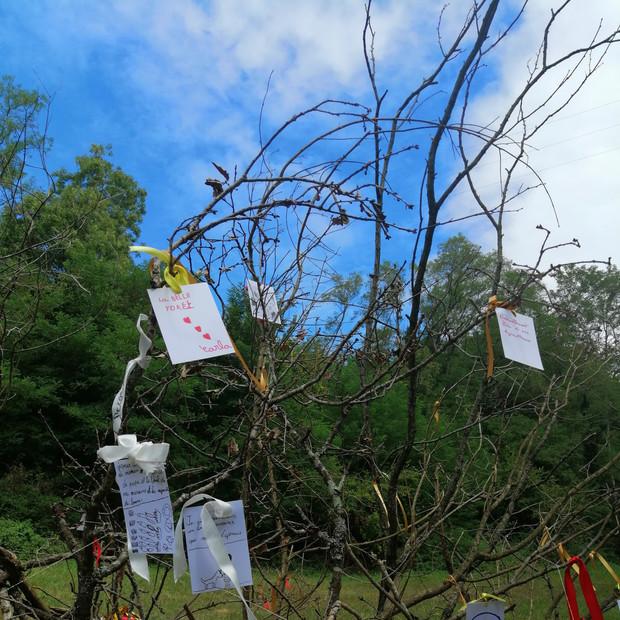 Une photographie de l'arbre à souhaits confectionné par Hélène Bertin pour l'atelier du 6 septembre.