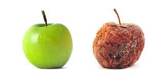 Pretty Fruitless