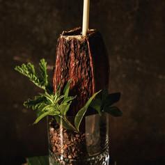 cacao pulp fizz.jpg