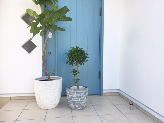 朝から植物の買い付けへ