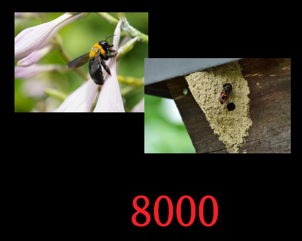 その他の蜂料金