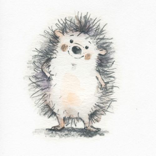 hedgehog, cute, adorable, illustration, animal, original artwork