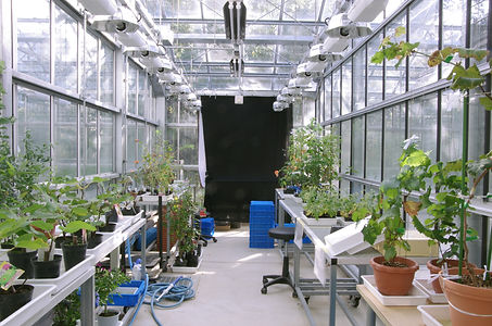 植物研究ガラス温室_1.jpg