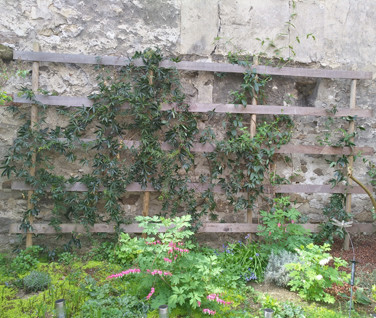 Accroche plantes grinpantes en palette