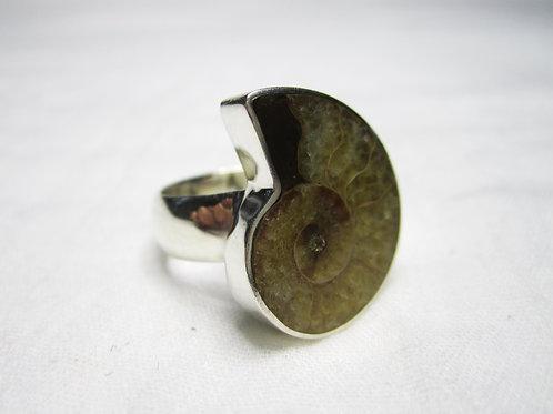 Amonitt ring