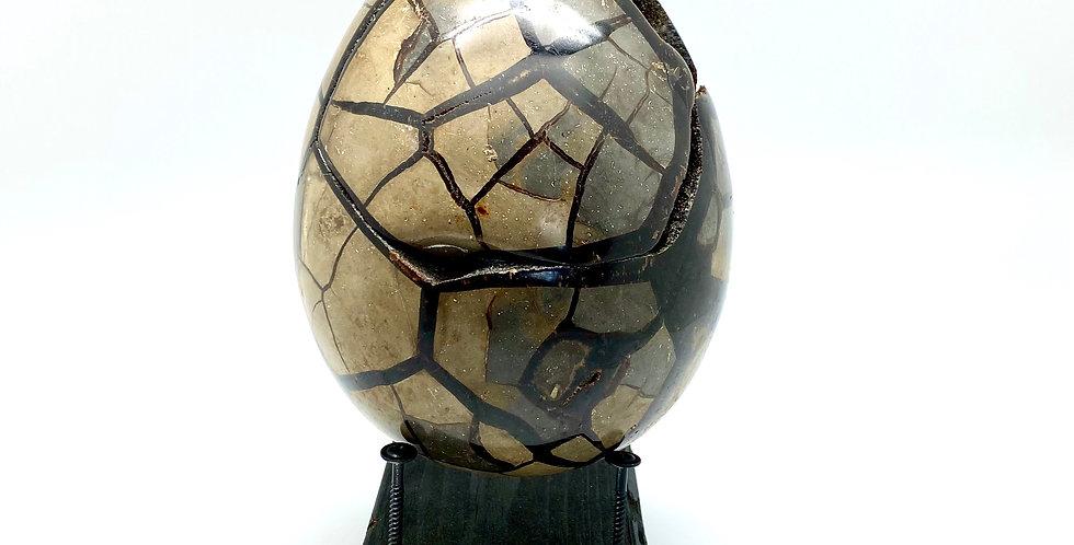 Drage egg  - Black Septerian