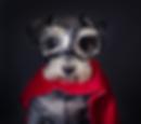 hero-dog-edit.png