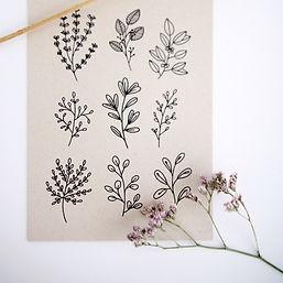 mijksje-botanisch-botanical-handgetekend