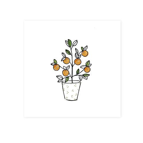 Wenskaarten sinaasappelboom | incl. envelop | 4 stuks