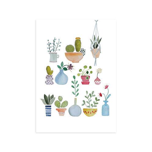 Ansichtkaart 'cactus'