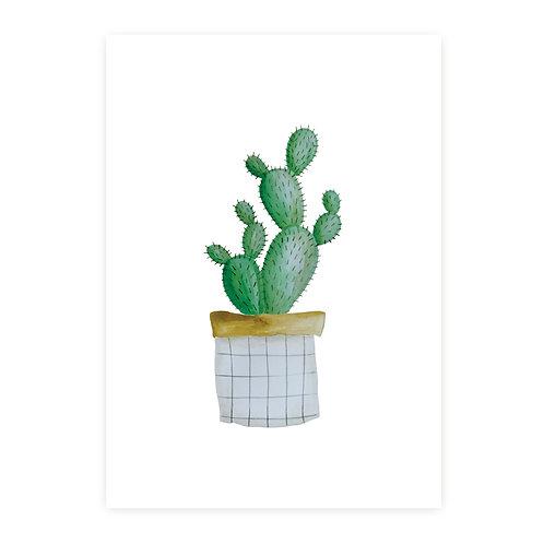Cactus | 2 stuks