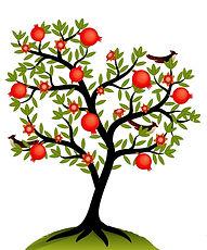 arbre%20%C3%A0%20grenades%20sans%20rose_