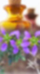 Fragonia-250-460-01.jpg