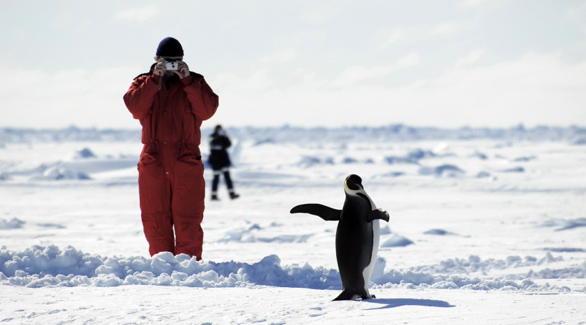 Photographing a penguin in the antarctic