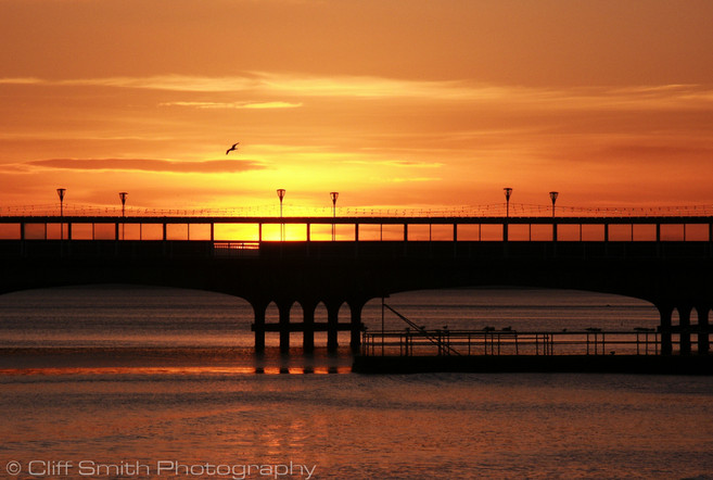CSP_SunsetGull 2.jpg