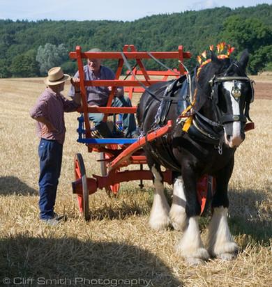 CSP_Horse&cart2.jpg