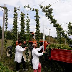 birra-del-contado-produzione-11.jpg