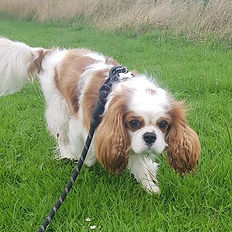 dog walker walk walking pet services daycare boarding visits musselburgh portobello wallyford newcraighall prestonpans tranent east lothian holiday