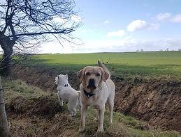 sergeant puppers lovely dog club walker walkin group solo walks pet visits boarding musselburgh east lothian wallyford prestonpans newcraighall