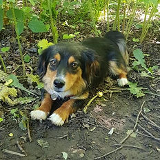 puppy visits beach woodland river lagoons puppy rescue pay flexible shift workers