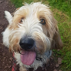 dog walker professional trustworthy carberry musselburgh newcraighall