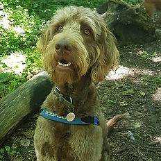 cheap affordable dog walking boarding daycare group walk professional east lothian