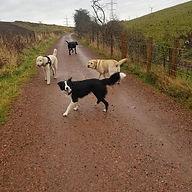 pet services visits cat dog east lothian professional flexible musselburgh